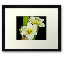 Yellow Stamen Framed Print