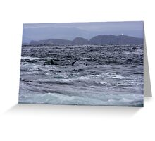 Seal Colony, Bruny Island Tasmania Greeting Card