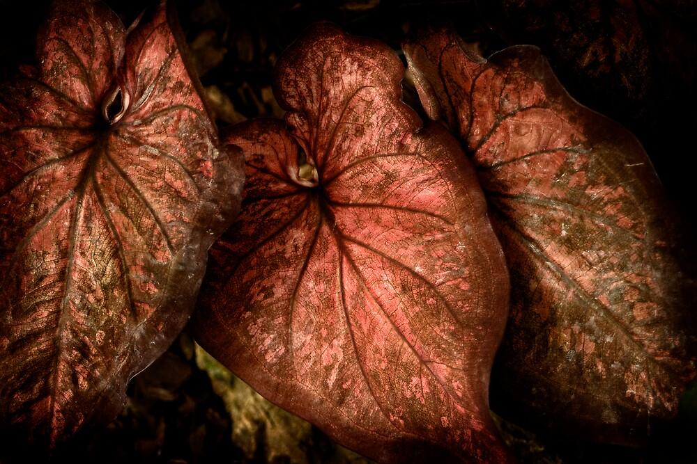 Leaves by Luke Haggis