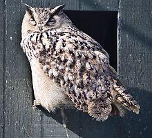Great Horned Owl by Geoffrey