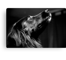 Molly The Proud Dog Canvas Print