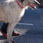St Patricks Day Irish Wolfhound by ragman