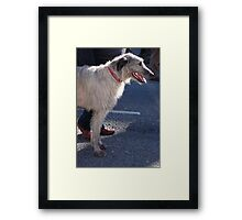 St Patricks Day Irish Wolfhound Framed Print