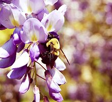 The Bee's Knees  by afntucker