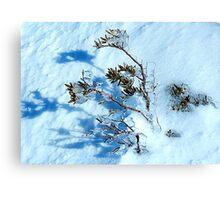 Crystal - Snowy Mountains, NSW Australia Canvas Print