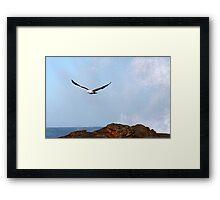 Crescendo of flight Framed Print