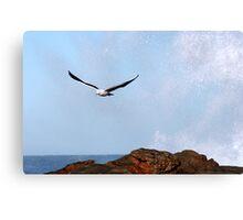 Crescendo of flight Canvas Print