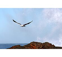 Crescendo of flight Photographic Print