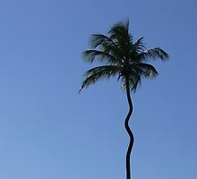 The Squiggly Palm by kevint