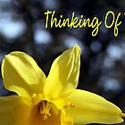 Yellow Daffodil - Thinking Of You by silverdew
