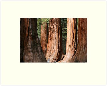 Mariposa Grove by Christophe Testi