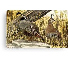Quail or Grouse Canvas Print