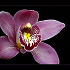 Cymbidium Orchid by orchiddesign