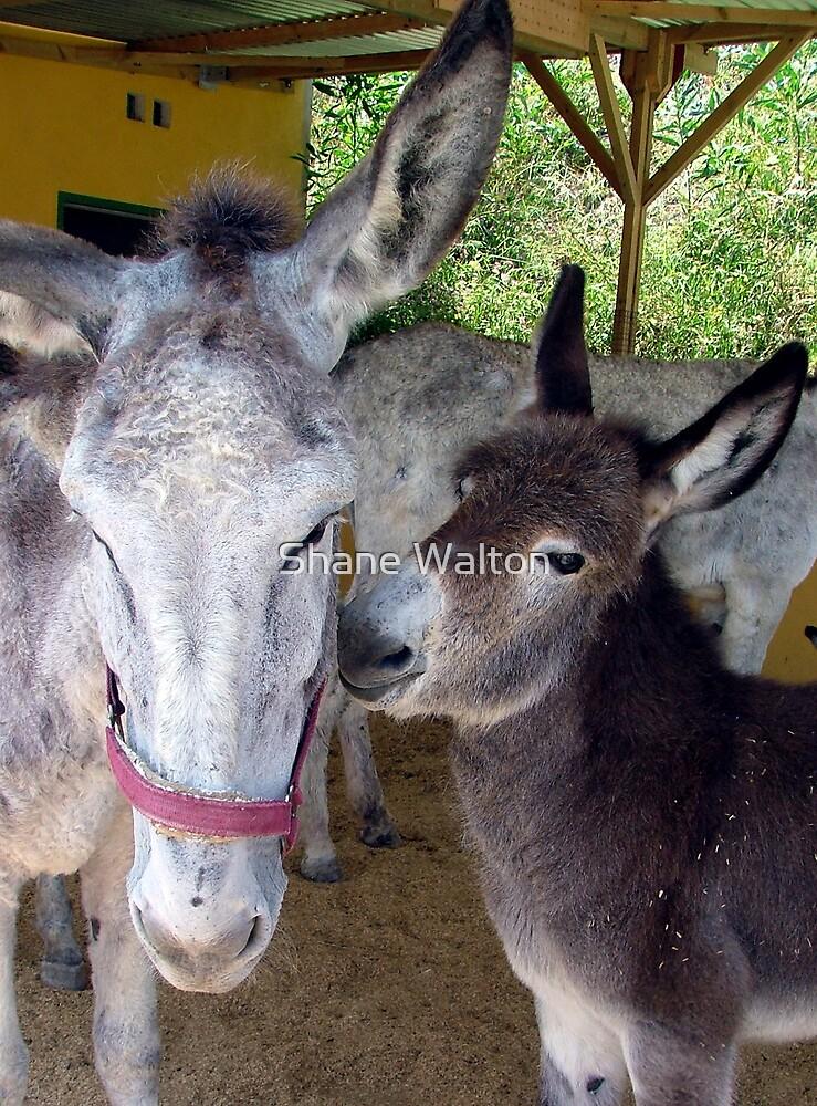 Donkey Hugs by Shane Walton