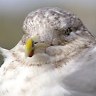 A Cold Day for even a GULL by Larry Llewellyn