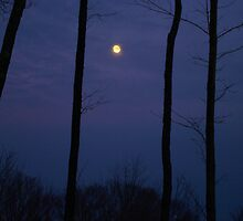 Vermont Moonlight Silhouette by Mistral Hill  Photography