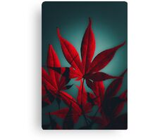 Japanese Maple in Crimson Canvas Print