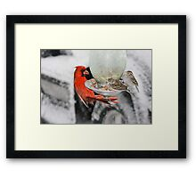 hungry birds Framed Print
