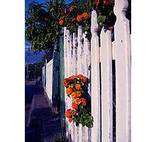 Suburbian bloom Photographic Print
