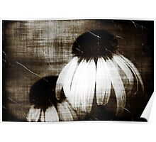 Echinacea Dark Dreams Poster