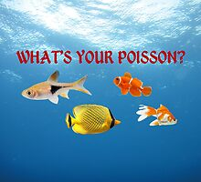 What's Your Poisson? by Andrew Alcock
