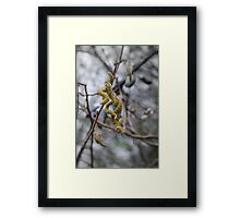 Curly Catkins Framed Print