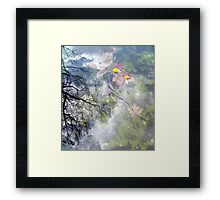 the four seasons Framed Print