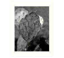 Prickley Pear Cactus Art Print
