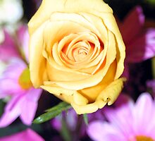 Yellow over pink by courier