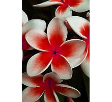 Frangipani Red Photographic Print