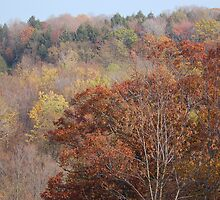 Fall on Display by Sarah McKoy