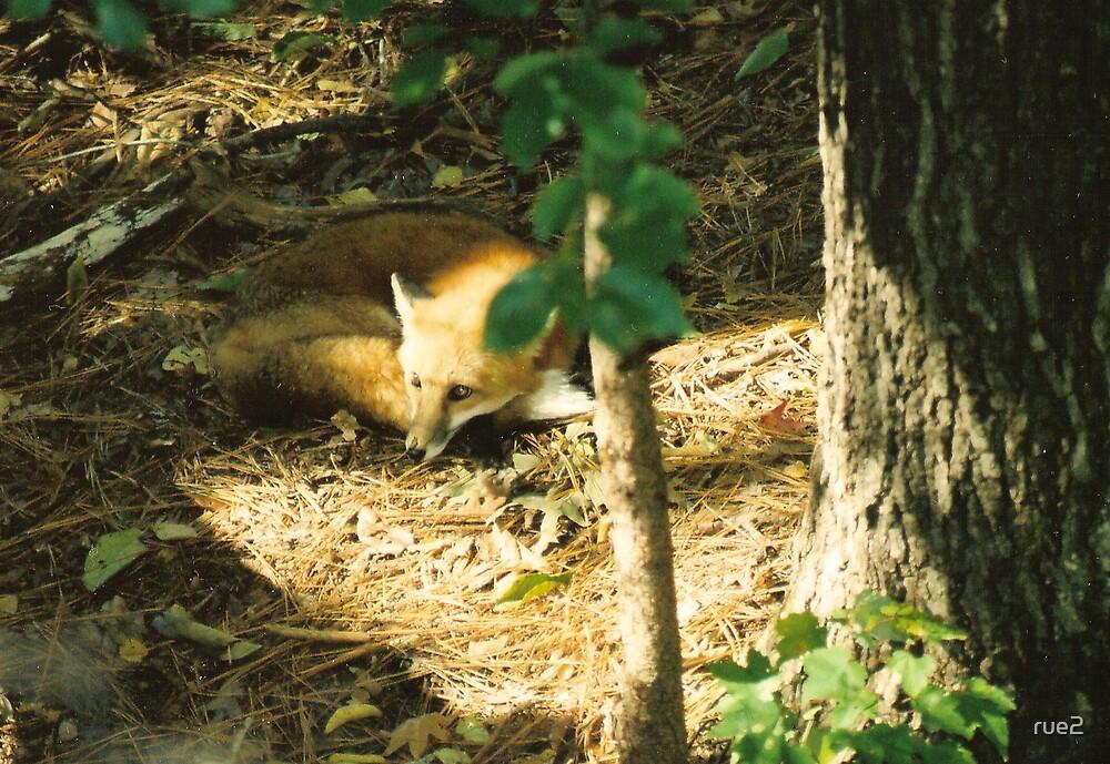 SLY FOX by rue2