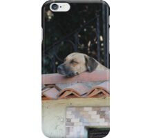 Dogs relaxing on the roof iPhone Case/Skin