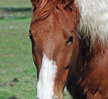 free-range horse by Lenny La Rue, IPA