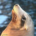 seal by Jenifer