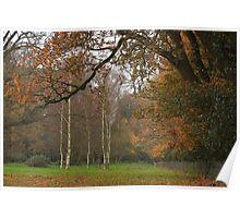 Natural fall framing Poster