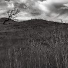 Old Tree by BlaizerB