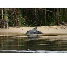 Disappearing Crocodile Photographic Print
