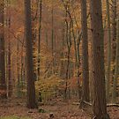 Autumn pines break through the forest canopy by miradorpictures
