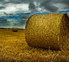 a bundle of hay by tjmasi