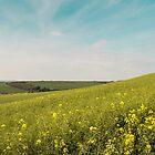 Dorset Landscape near Abbotsbury UK by Pauline Tims