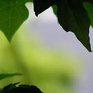 leaves... by xXDarkAngelXx