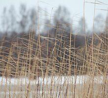 cold winter wind by mrivserg
