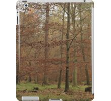 The beauty of autumn in native woodland iPad Case/Skin