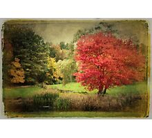 Antique Autumn Photographic Print