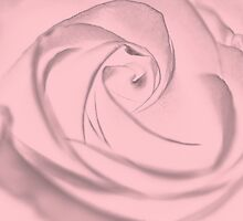 Pale Pink Rose by Lena127