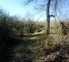 Desolate Pathway by bangogirl