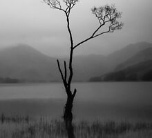 Buttermere Lone tree by LightPhonics