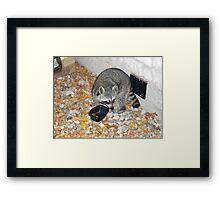THIEF! (A Lighthearted Cajun Parody) Framed Print