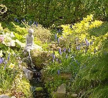Edna's garden/ More grape hyacinths by dougie1